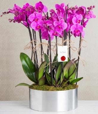 11 dallı mor orkide metal vazoda  İstanbul Ümraniye çiçek gönderme sitemiz güvenlidir