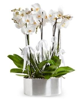 Beş dallı metal saksıda beyaz orkide  İstanbul Ümraniye çiçek yolla