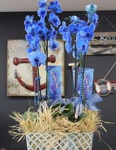 4 dallı özel mavi orkide  İstanbul Ümraniye çiçek siparişi vermek
