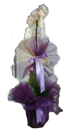 Tek dallı beyaz orkide süper kalite ithal  İstanbul Ümraniye çiçek siparişi sitesi