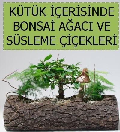 Kütük içerisinde bonsai japon ağaç bitkisi  İstanbul Ümraniye çiçek satışı