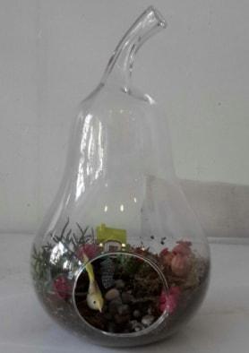 Armut orta boy cam terrarium tanzim  İstanbul Ümraniye çiçekçi telefonları