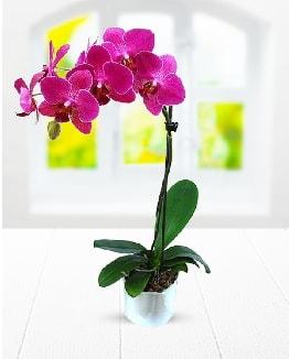 Tek dallı mor orkide  İstanbul Ümraniye çiçek satışı