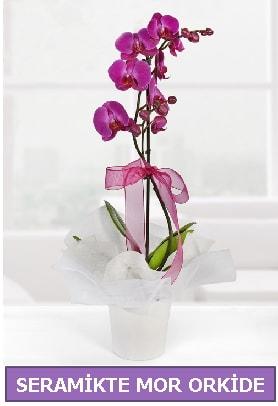 Seramik içerisinde birinci kalite tek dallı mor orkide  İstanbul Ümraniye İnternetten çiçek siparişi