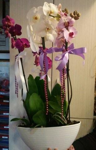 Mor ve beyaz ve pembe 6 dallı orkide  İstanbul Ümraniye ucuz çiçek gönder