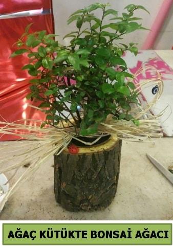 Doğal ağaç kütük içerisinde bonsai ağacı  İstanbul Ümraniye çiçek gönderme sitemiz güvenlidir