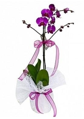 Tekli Mor Orkide  İstanbul Ümraniye çiçek yolla