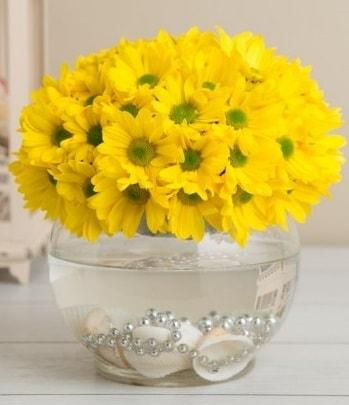 Fanusta Sarı Papatya  İstanbul Ümraniye çiçek siparişi sitesi