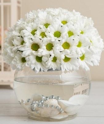 Fanusta beyaz Papatya  İstanbul Ümraniye çiçek satışı