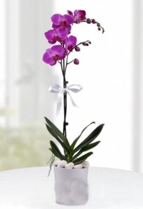 Tek dallı saksıda mor orkide çiçeği  İstanbul Ümraniye çiçekçiler