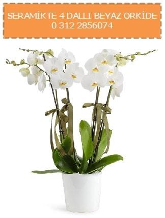 Seramikte 4 dallı beyaz orkide  İstanbul Ümraniye çiçekçiler