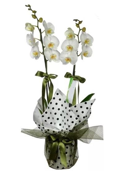 Çift Dallı Beyaz Orkide  İstanbul Ümraniye 14 şubat sevgililer günü çiçek