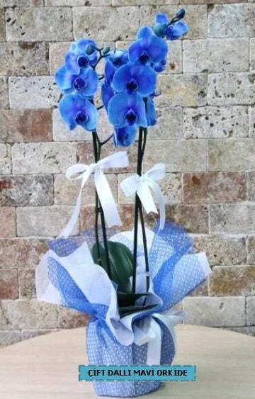 çift dallı ithal mavi orkide  İstanbul Ümraniye çiçek yolla