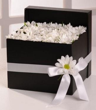 Kutuda beyaz krizantem papatya çiçekleri  İstanbul Ümraniye çiçek siparişi sitesi