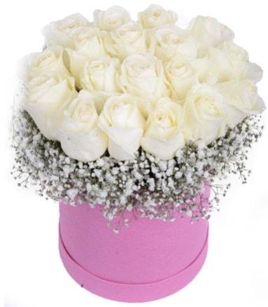 Renkli kutuda 19 adet beyaz gül  İstanbul Ümraniye internetten çiçek satışı