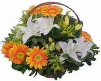İstanbul Ümraniye online çiçekçi , çiçek siparişi  sepet modeli Gerbera kazablanka sepet