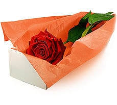 İstanbul Ümraniye çiçek mağazası , çiçekçi adresleri  Kutuda tek gül özel kisilere